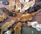 Captura de Gatos